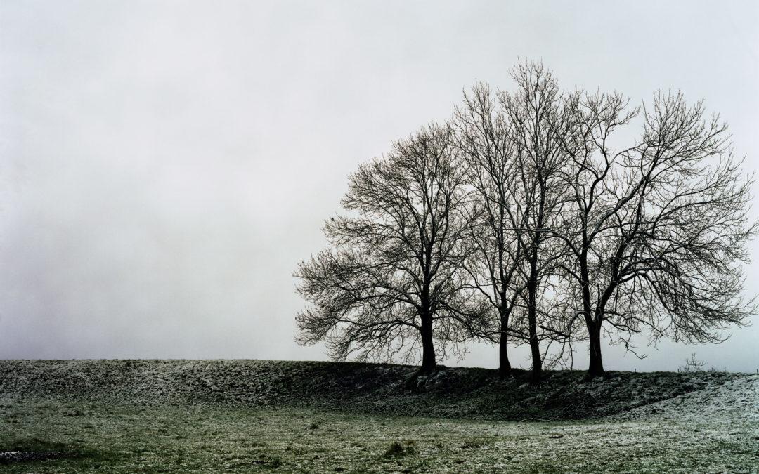 Victoire : le combat d'Ecolo pour protéger les arbres remarquables de Wallonie a payé