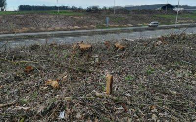 Abattage d'arbres le long des routes: Ecolo estime que la biodiversité est en danger