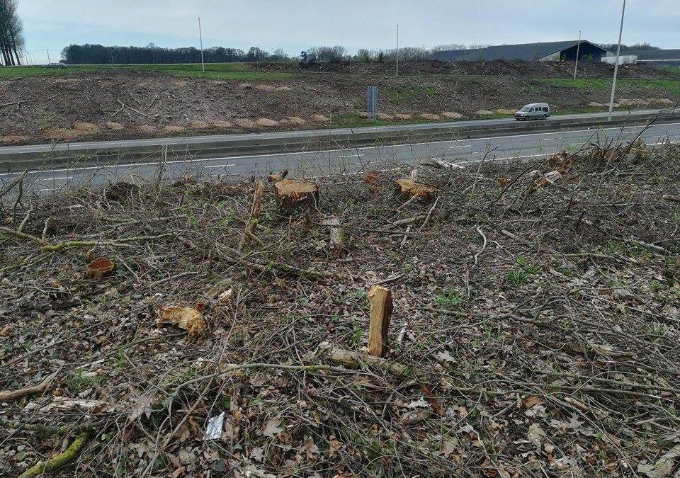 Coupe d'arbres le long des voiries: Ecolo demande à voir la feuille de route