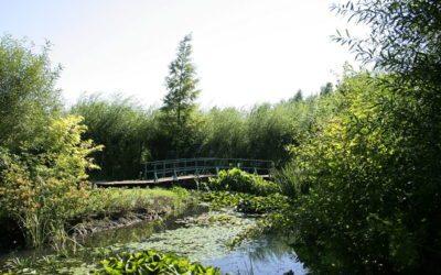 Lac de Bambois: plus de 5000 visiteurs au «Réveil du lac»… avec comme objectif de poursuivre cette dynamique positive
