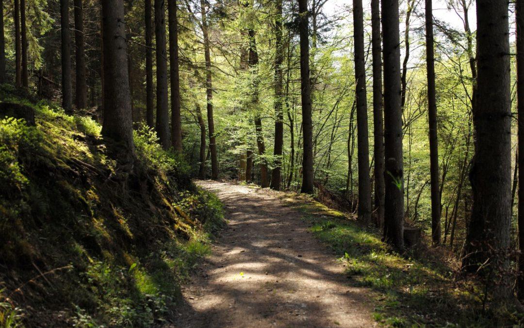 Unité anti-braconnage: pour Stéphane Hazée, le projet du Gouvernement révèle une volonté de mettre au pas l'Unité et reste gravement dommageable pour la nature et la biodiversité