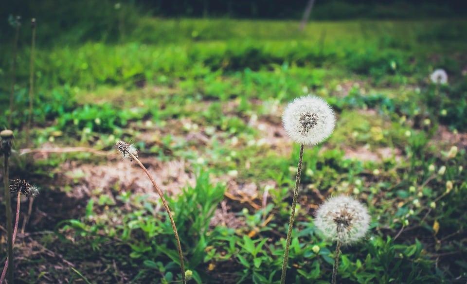 Suppression de la cellule d'avis en développement durable: pour Ecolo, le Gouvernement wallon se simplifie la vie, aux dépens de l'environnement
