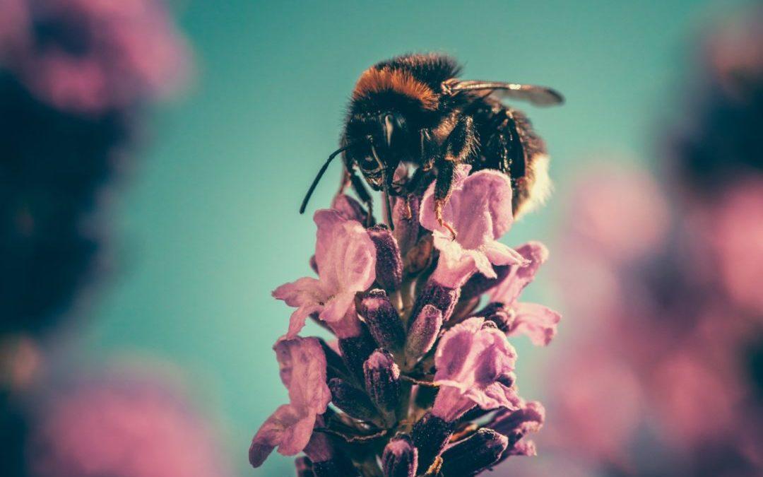 La biodiversité est notre assurance-vie mais… ne préoccupe pas le Parlement de Wallonie
